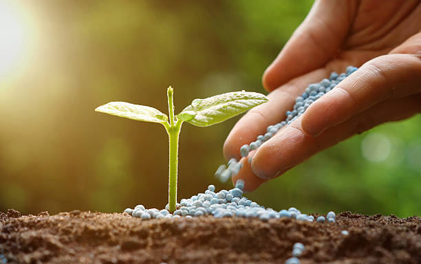 hand of a farmer giving fertilizer to young baby plants seedling in germination sequence on fertile soil with natural green background